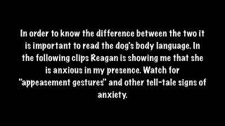 Stress Signals: Canine Body Language, Dog Behavior
