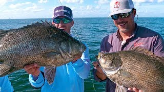 Fishing for Monster Tripletail Fish - ft. Scott Martin - 4K