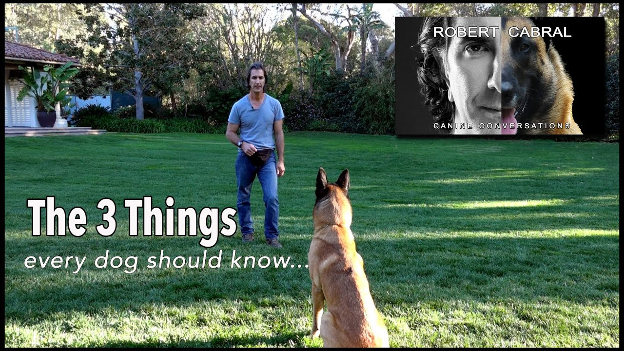 The Most Important Things to Teach Your Dog- Robert Cabral Dog Training #4