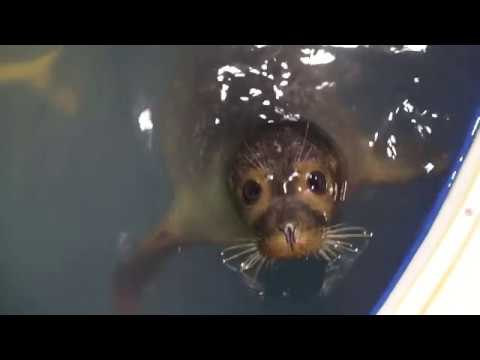 Seal rehab and release