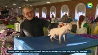 В Петербурге кошки превратились в героев мультиков - МИР24