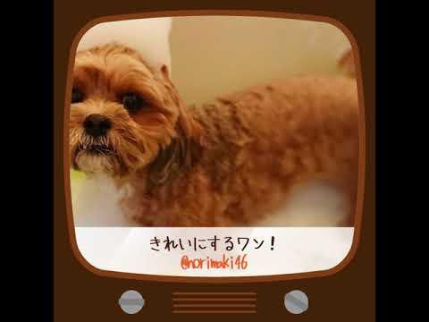 【Pecon】今日の動画!