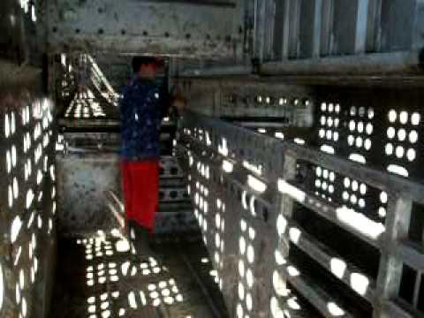 inside a cattle trailer