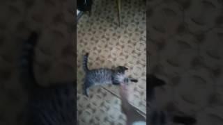 Отдам кошку в хорошие руки