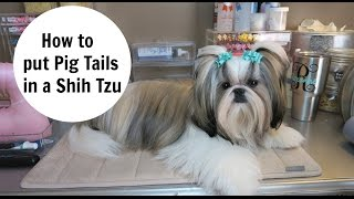 How to put Pigtails in your Dog
