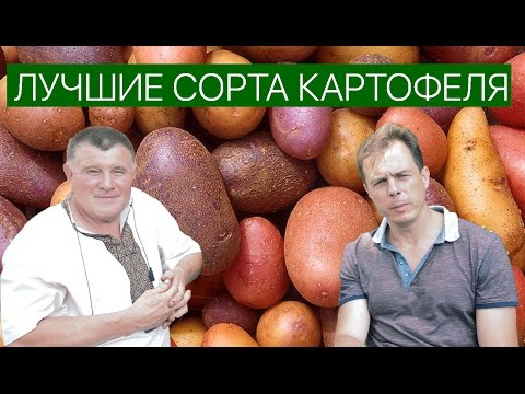 Популярные сорта яблок с фото Рекомендации по
