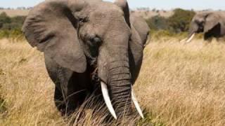 African Safari Wild Animals