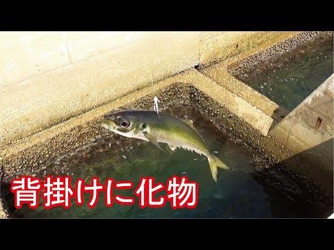 堤防エレベーター泳��釣り中�ん�も��生物���
