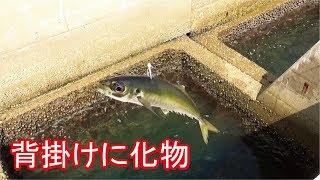 堤防エレベーター泳がせ釣り中とんでもない生物と遭遇