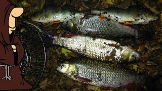 Снова надолбили Голавлей и пару Окуней Рыбалка на том же месте только ночью на реке Сок в Сентябре