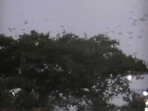 birds at libreville airport gabon