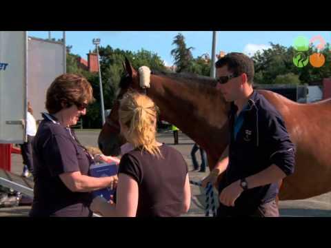 Arrivals at the Dublin Horse Show 2012