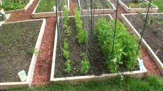 GreenFun: Beginner Vegetable Gardener in Ottawa Canada and his Garden Part I