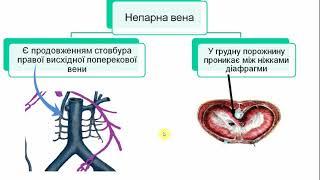 Анатомія венозної системи організму