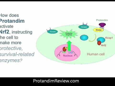 Protandim and The Ohio State Heart Study