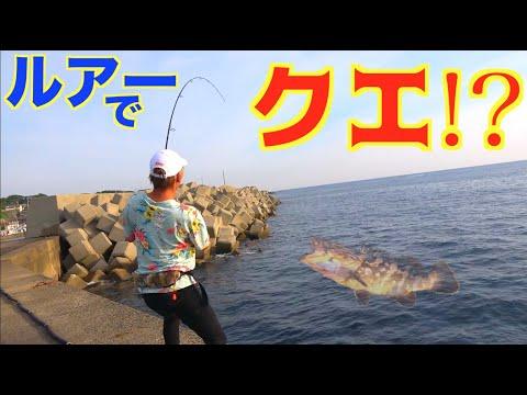 超高級魚クエが堤防の足元で釣れた