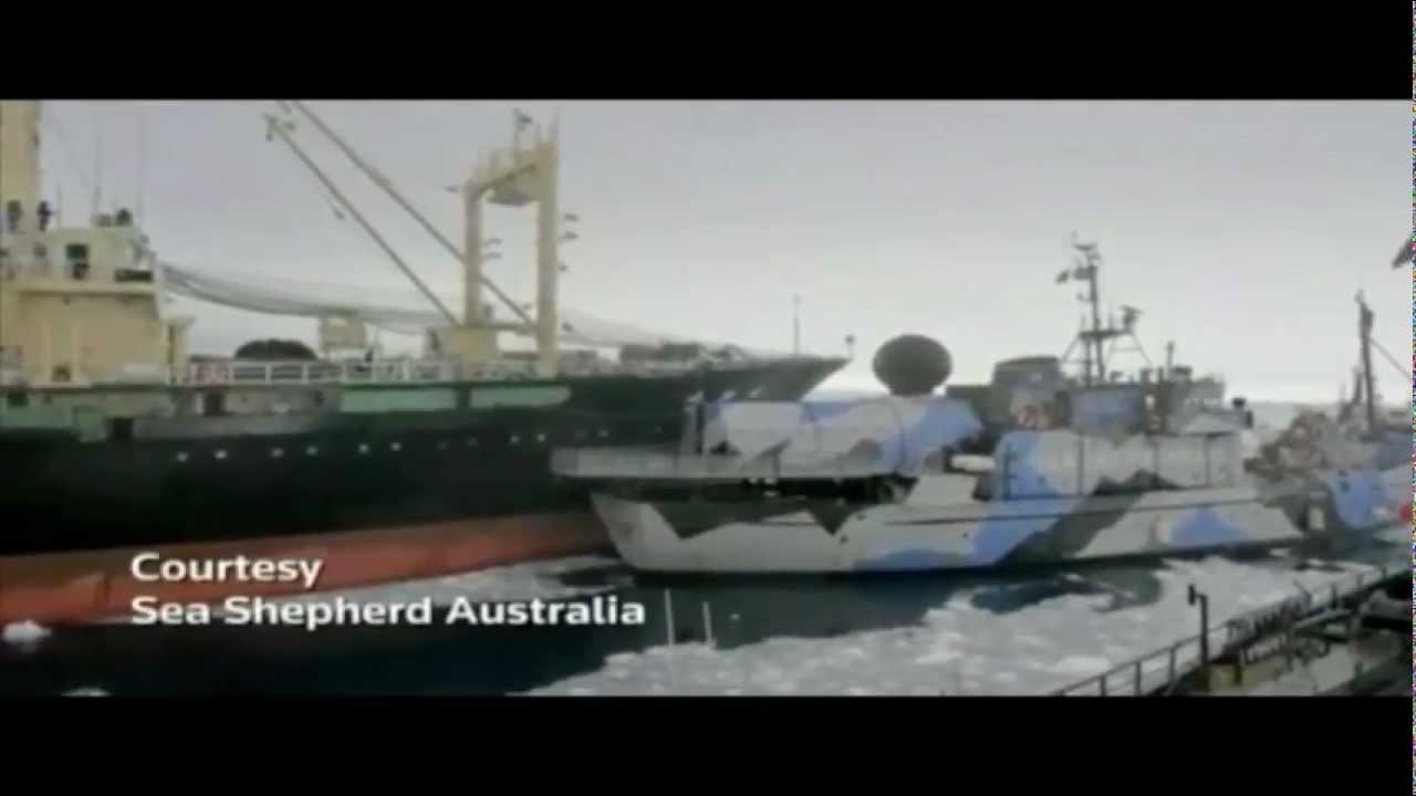 澳洲保育團體 指控日本捕鯨船衝撞 - YouTube