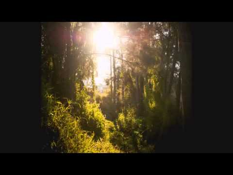 ♪♪♪ Ambient Sound Therapy  - Long Forrest Walk - Sounds of Nature, Birds & Peace!