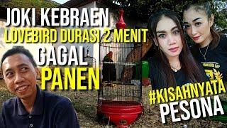 Top Hits -  Joki Kebraen Lovebird Ngekek Panjang 2 Menit