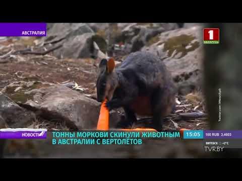 Тонны моркови скинули животным в Австралии с вертолётов
