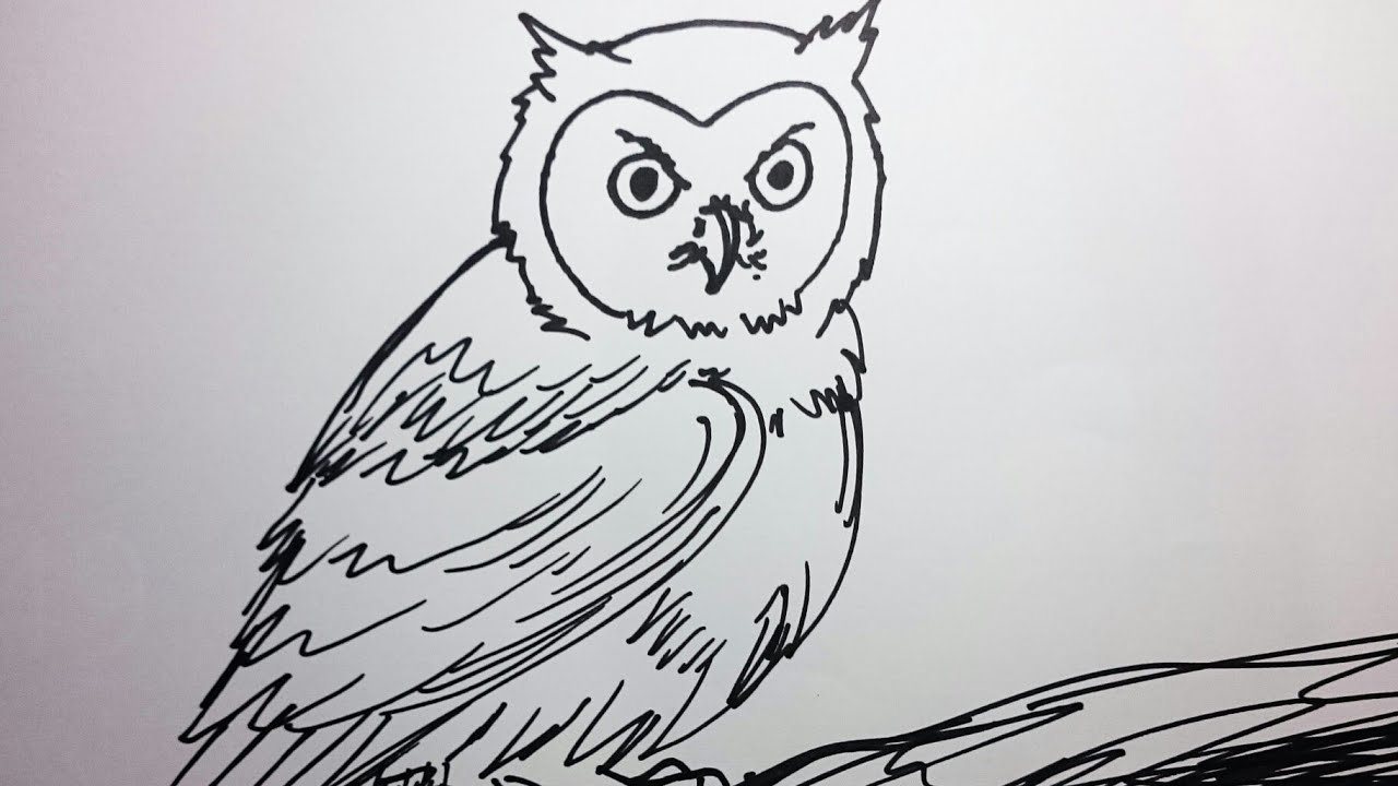Cara Menggambar Burung Hantu How To Draw Owl Youtube