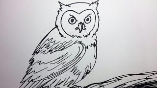 CARA MENGGAMBAR BURUNG HANTU - How to Draw OWL