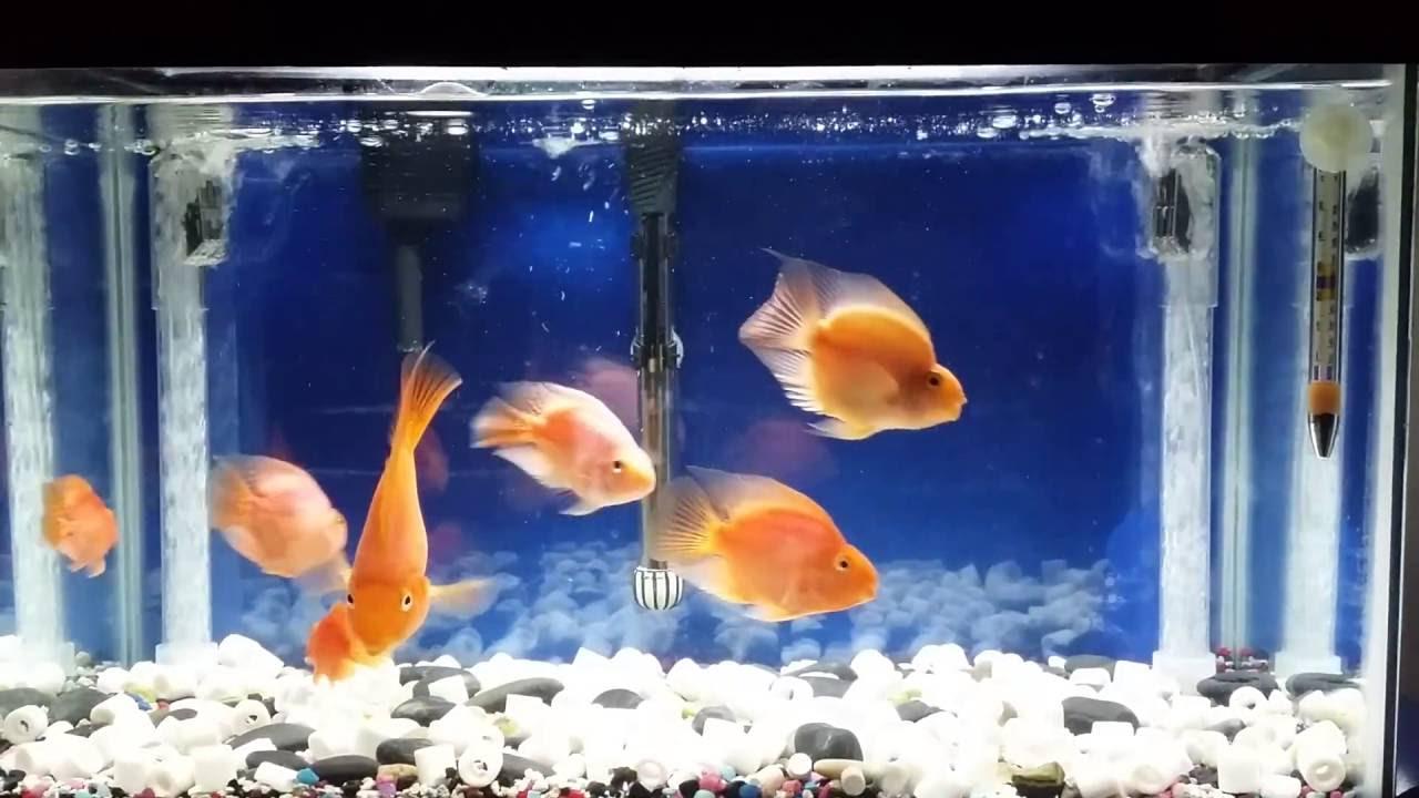 under gravel fish tank filter