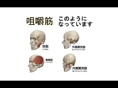 図解 = 咀嚼筋  【あごのトラブル顎関節症】