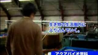 東京農業大学 ワタシの挑戦 【ホッカイエビの生態の解明】