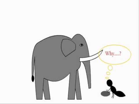 Funny elephant aunt romance flash animation