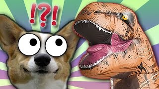 CORGI vs T-REX | Weird Things Online