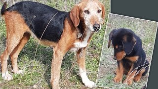 Mother dog and her puppy found abandoned up to the mountains. A young couple saved their life.