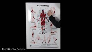 Stretching Large Poster