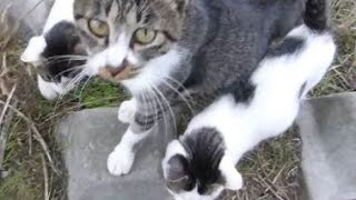 母猫を撫でたらお礼に子猫をうじゃうじゃ連れてきたwww thumbnail