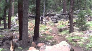 Arizona Trail, Aspen Corner, Flagstaff, AZ - 2013