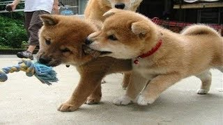 JEALOUS DOGS Want Attention | Funniest Jealous Dogs Compilation