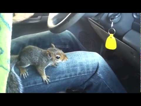 Squirrel Appreciation Day: Squirrel Driving Car