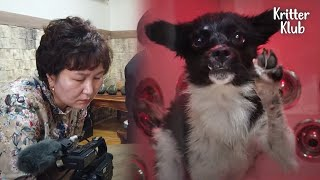 Cleaner's Couple Bursts Into Tears After Watching Dog's Video, Because? (Part 2) | Kritter Klub