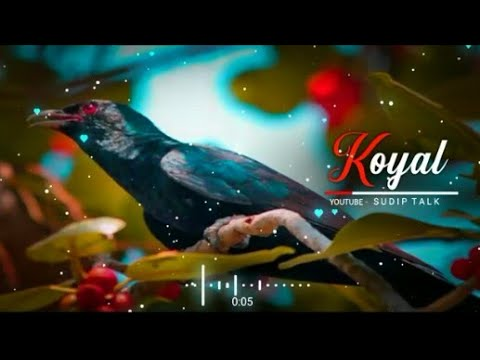 🎧🎧💖💝bole-jo-koyal-bago-mein/-yaad-piya-ki-aane-lagi//dj-song-🎵🎵//tik-tok-viral-song