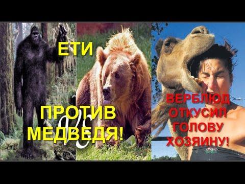 Верблюд откусил голову хозяину! The Camel Took The Head Of The Owner!