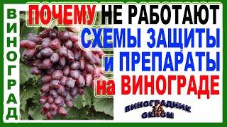 Вот ПОЧЕМУ ЛЮБАЯ СХЕМА ЗАЩИТЫ винограда от болезней НЕ РАБОТАЕТ Этому есть объяснение