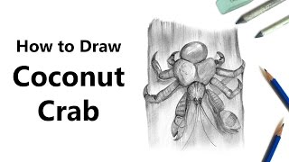 How to Draw a Coconut Crab with Pencils [Time Lapse]