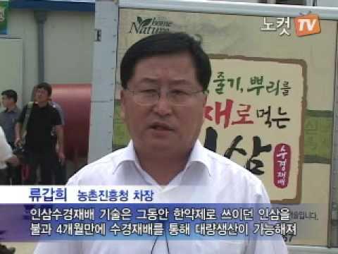 [노컷TV]인삼수경재배 산업화 성공 인삼, 국민의 식탁으로