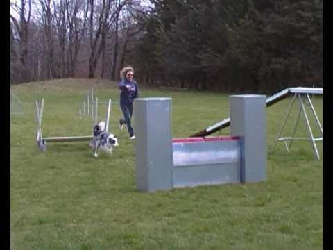 agility dog petrademone cristina e niobe aprile 2010.MP4