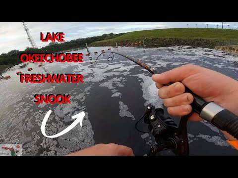 Heartbroken Over A LAKE OKEECHOBEE FRESHWATER SNOOK *Bicycle Fishing Adventure*