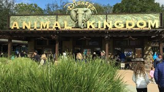 Animal kingdom trick