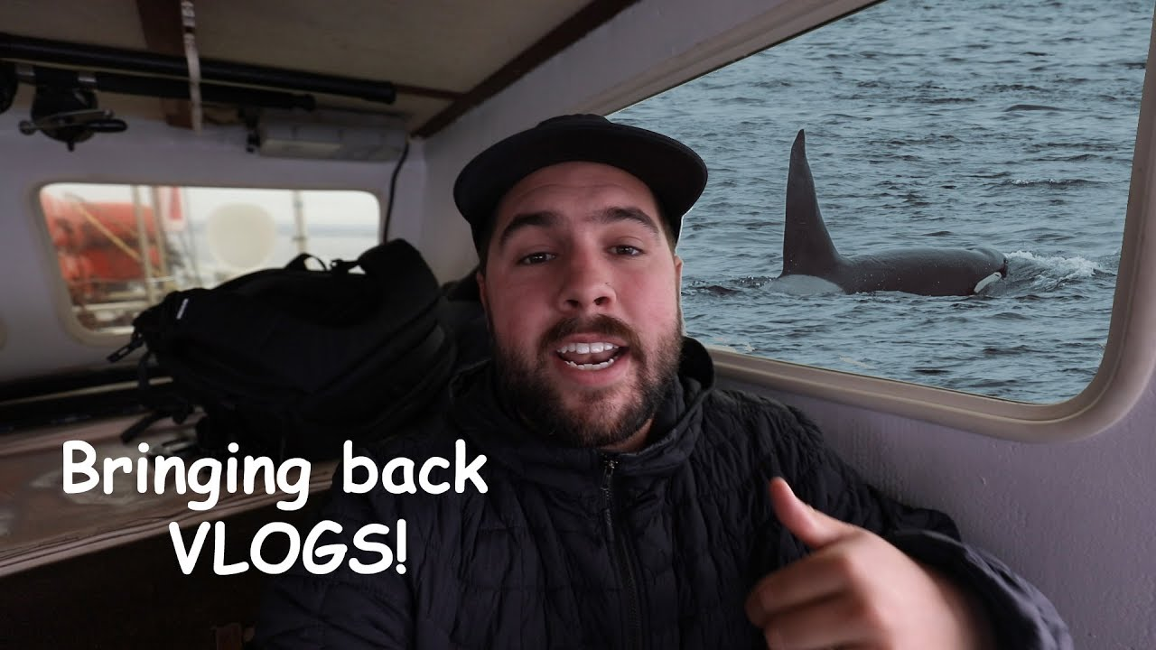 Animals are acting weird wonder why?! Oh there's Orcas!