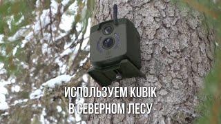 Испытание новинки 2019 - фотоловушки KUBIK