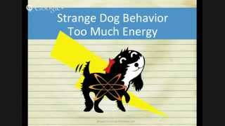 Strange Dog Behavior - Chasing The Tail (1 Of 5)