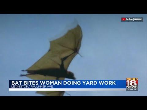 Woman Bitten By Bat In Lexington Neighborhood